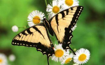 imagens-borboletas.jpg