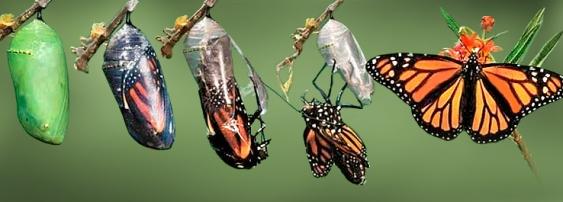 Lagarta-e-borboleta.jpg